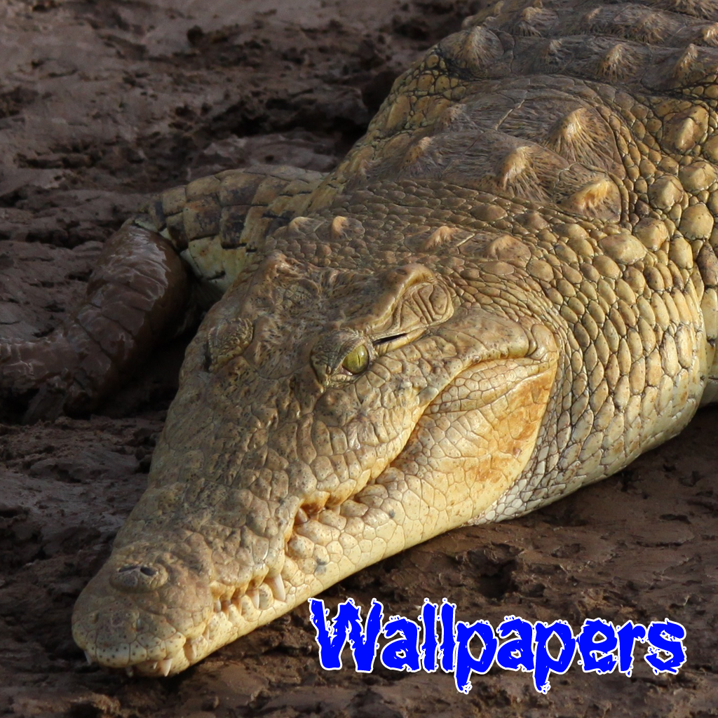 Croc Wallpapers for iPhone